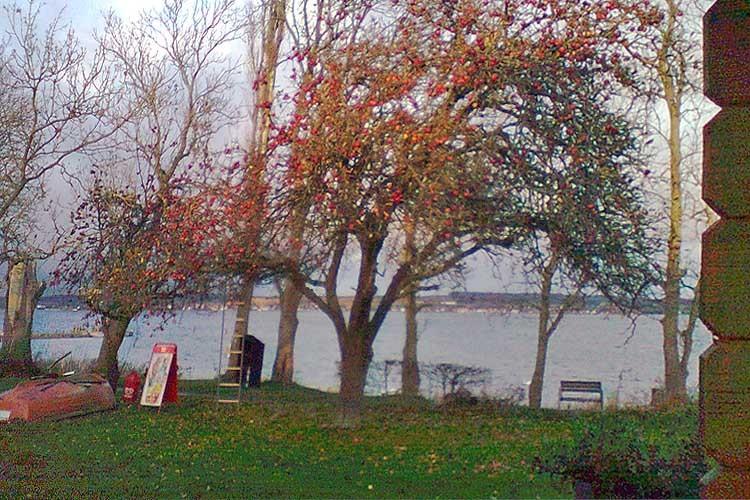 Efterår på pladsen