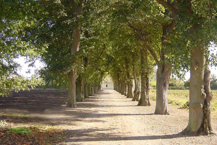 Lindeallén fører op til Åløkkegården.jpg