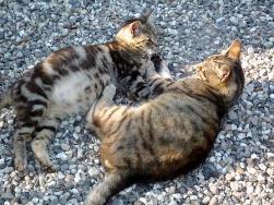 katte 2.jpg