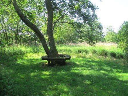 træ med bænk.jpg