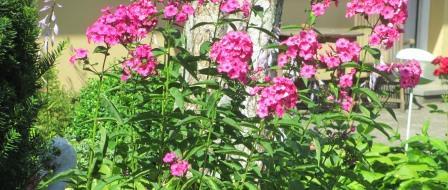 blomster komprimeret.jpg