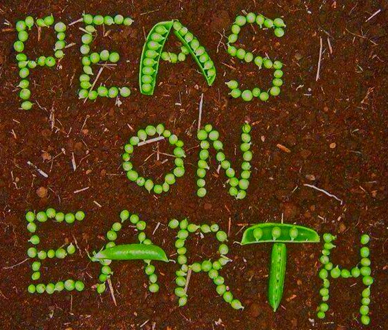 Sign made of peas